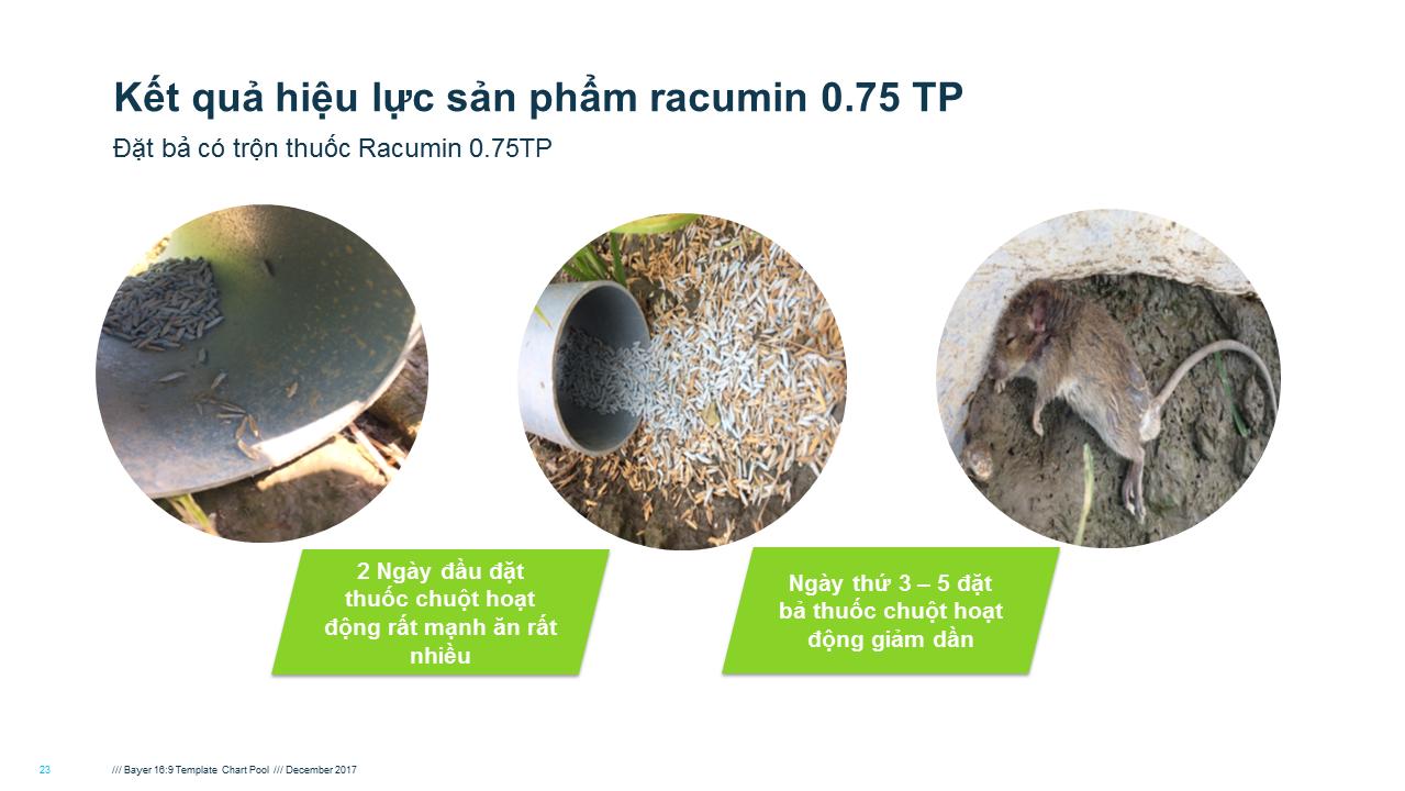Racumin 0.75TP diệt chuột hiệu quả trên đồng ruộng